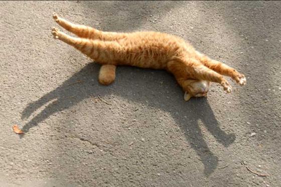catstretch1