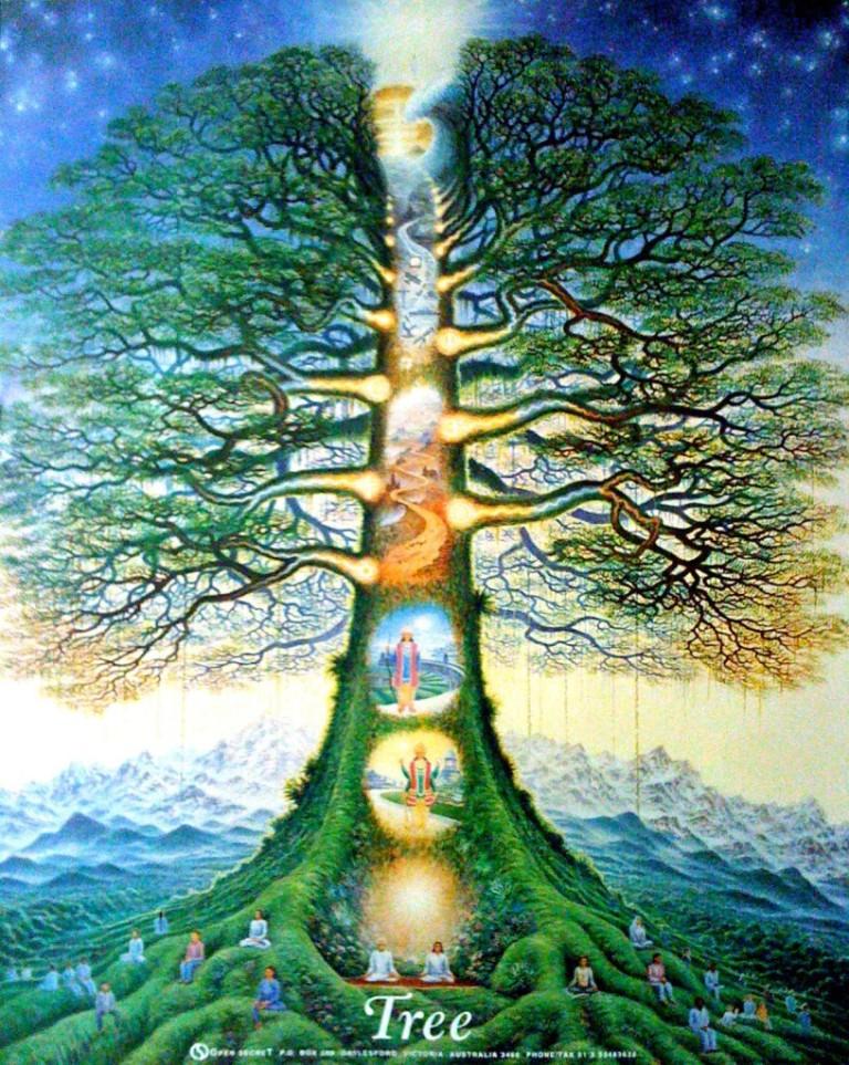 tree_of_life_australia-816x1024